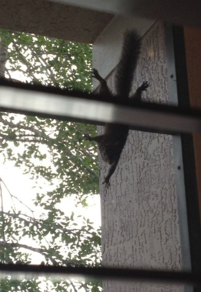 squirrel web