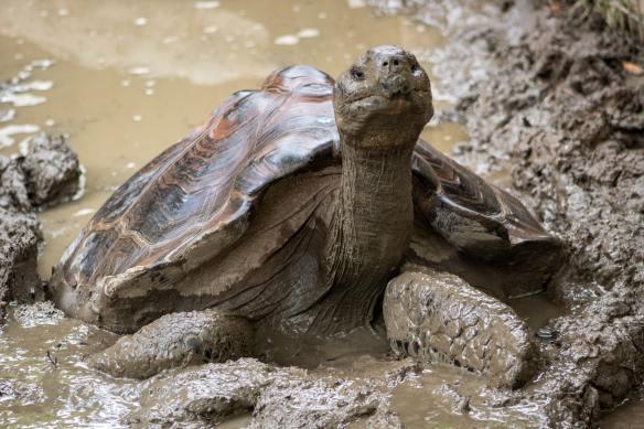 turtle joshua-j-cotten-noUFOAxHOq4-unsplash